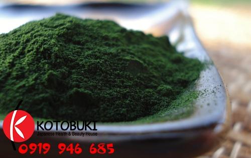 Nên sử dụng tảo lục Chlorella được điều chế đúng cáchNên sử dụng tảo lục Chlorella được điều chế đúng cách