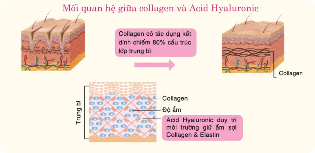 collagen-acid-hyaluronic-1024x498