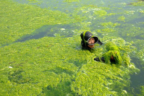 spirulina-pond-myhealthnote